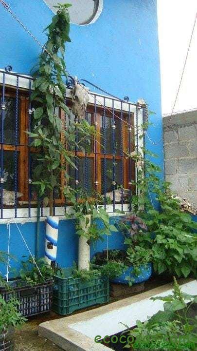 Organoponía, una excelente solución para el huerto en el balcón 2