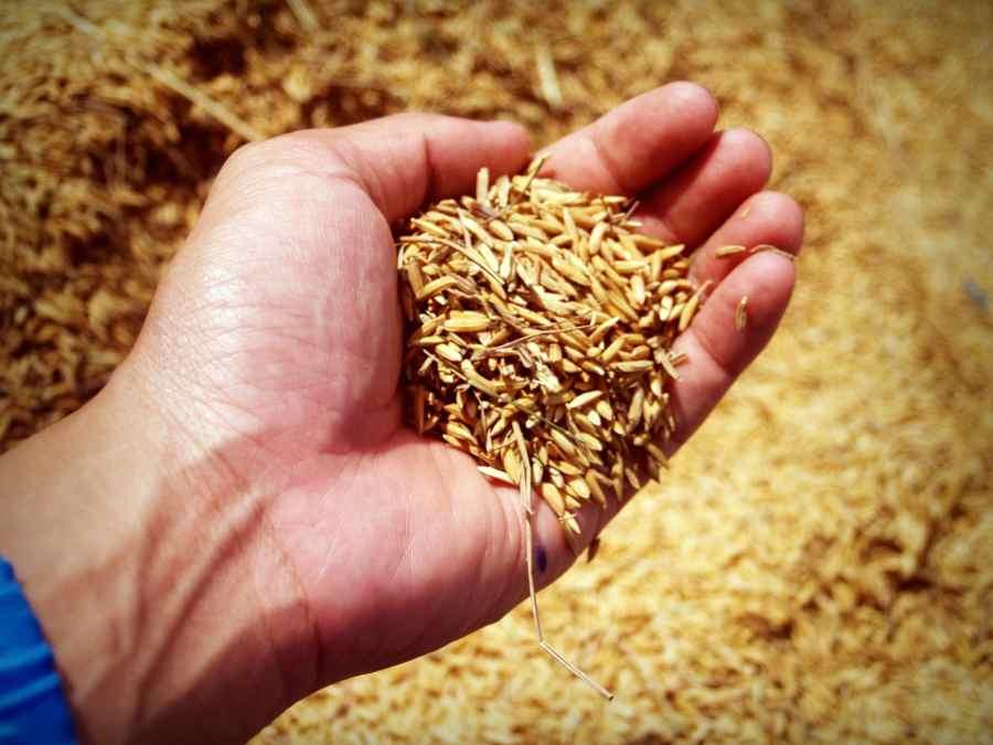 propiedades del salvado de trigo