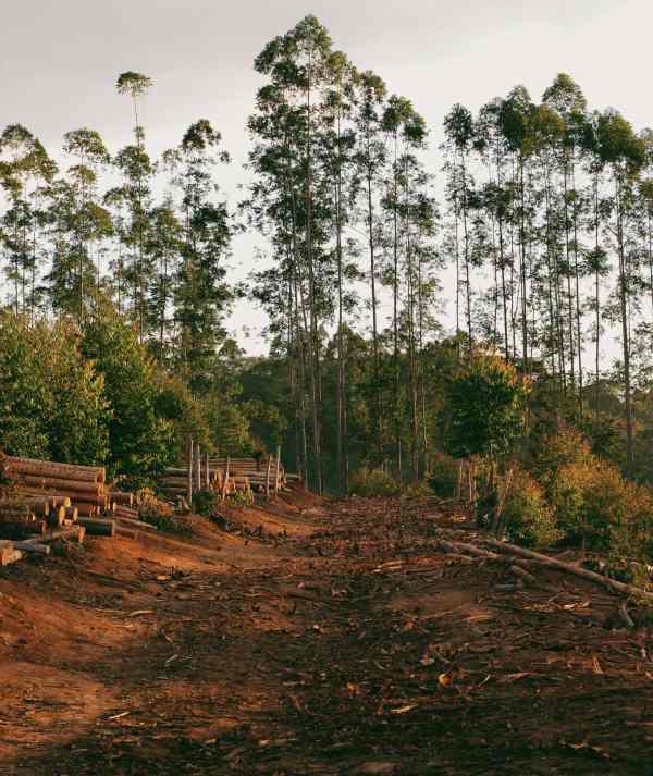 causas de la deforestacion