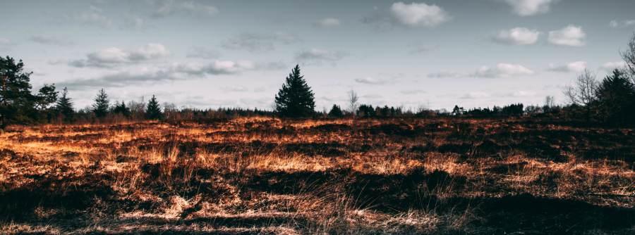 consecuencias de la deforestacion