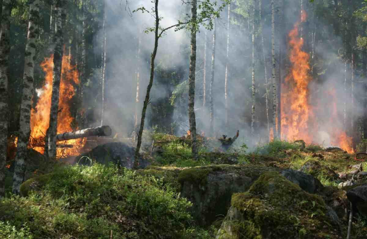 consecuencias de los incendios forestales