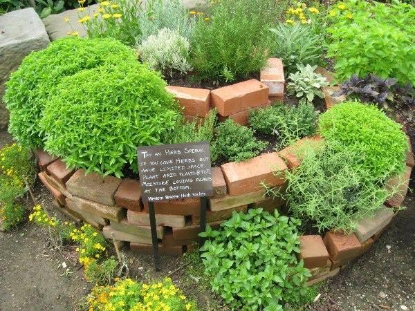 Cómo hacer un huerto de plantas aromáticas y medicinales 2