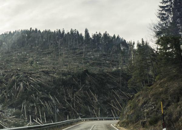 que es la deforestacion