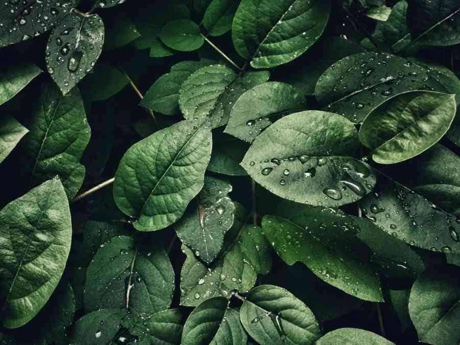 clasificacion de las plantas