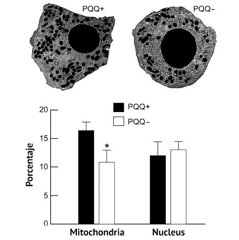 La medicina mitocondrial al rescate de sus células 2