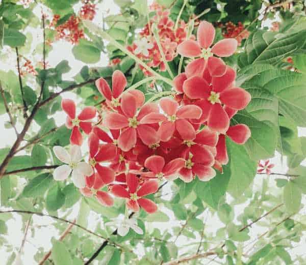 enredaderas con flor