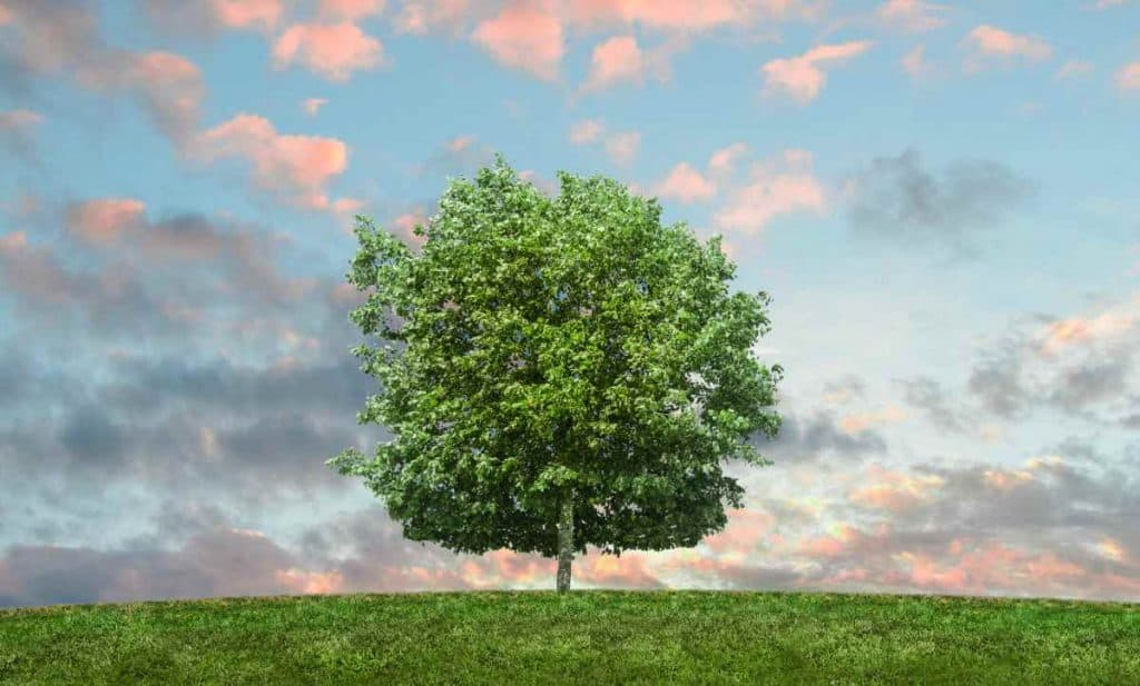 ramas de la ecologia