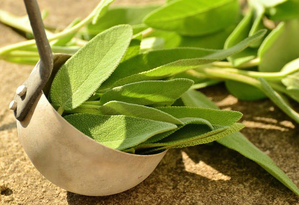 Salvia, propiedades, beneficios y contraindicaciones de esta planta 1