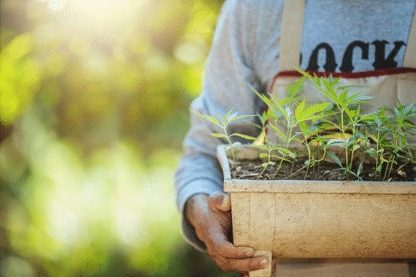 Como cultivar marihuana de interior 1