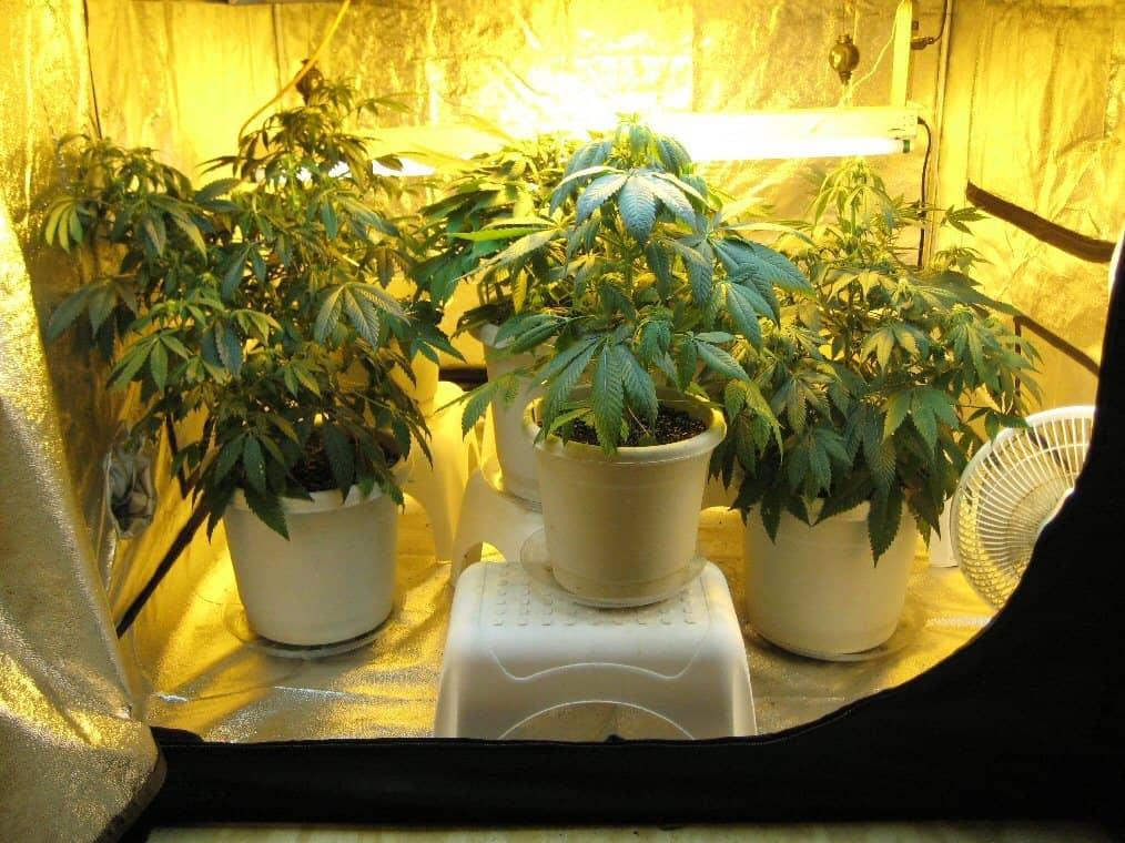 Consejos para cultivar marihuana en interior 2