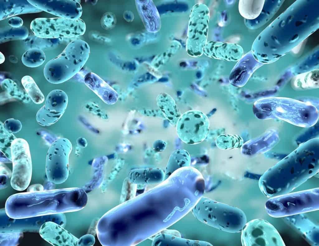 Sus intestinos podrían salvarle de más de 213 enfermedades 1