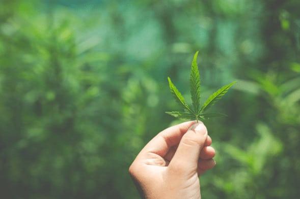 Consejos para cultivar marihuana en interior 1