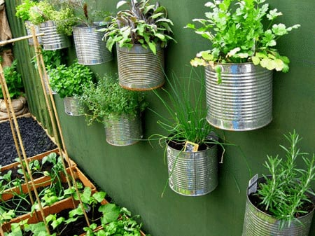 Cómo hacer un huerto de plantas aromáticas y medicinales 3