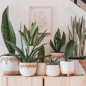 plantas decorar oficina