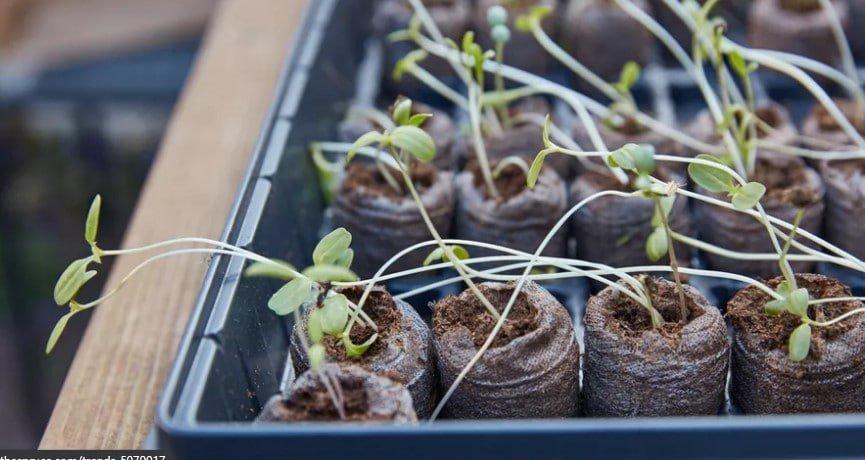 Remojar antes de sembrar 1