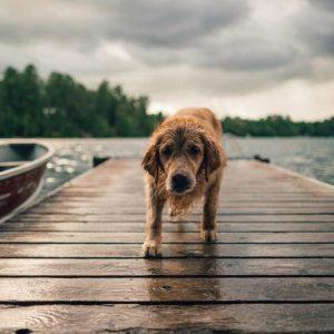 diarrea en perros remedios caseros