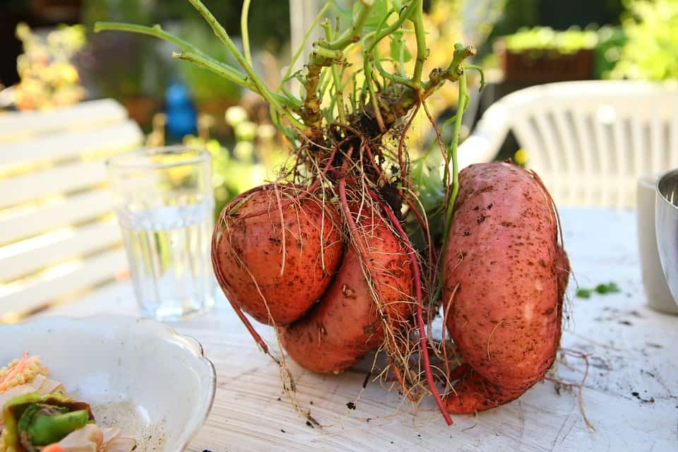Beneficios batata